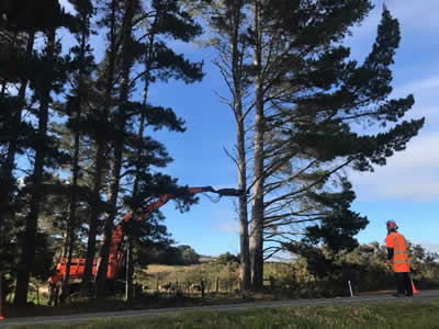 Shelterbelt removal in Kerikeri, Bay of Islands and Whangarei