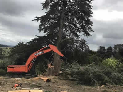 Site Clearing in Kerikeri, Bay of Islands and Whangarei