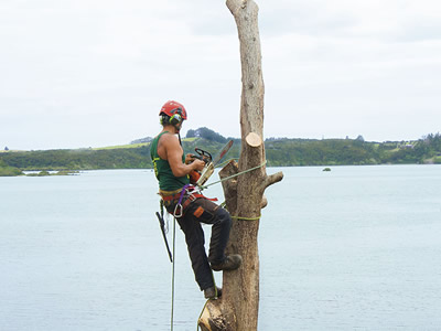 Tree Pruning in Kerikeri, Bay of Islands and Whangarei