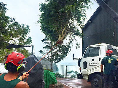 Tree Removal in Kerikeri, Bay of Islands and Whangarei