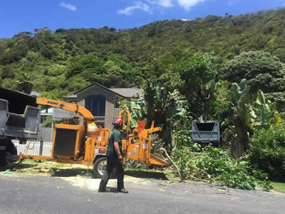 Tree Trimming in Kerikeri, Bay of Islands and Whangarei